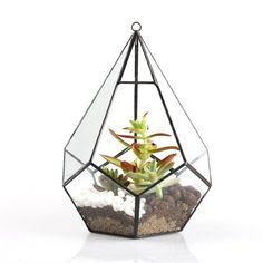 A polyhedron terrarium to house a few of your succulents. | 31 Beautiful Products You Won't Believe You Can Get On Amazon