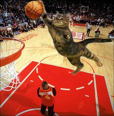 Funny cat playing a basketball match! Cute Cats Photos, Funny Cat Photos, Funny Pictures, Funny Cat Memes, Funny Cats, Funny Animals, Fun Funny, Funny Humor, Funny Shit