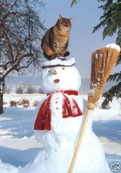 Top 7 des chats avec un bonhomme de neige