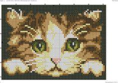 Foto en el muro de comunidad Cross Stitch Owl, Cat Cross Stitches, Cross Stitch Animals, Cross Stitch Kits, Cross Stitch Charts, Cross Stitch Designs, Cross Stitching, Cross Stitch Embroidery, Hand Embroidery Designs