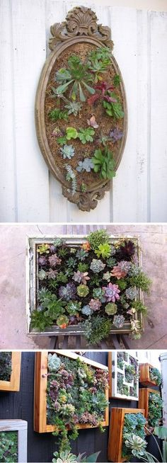Succulents in a frame! This would work so well on our patio divider fence!