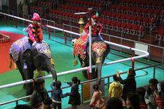 점보빌리지  코끼리공연