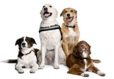 Happy Together: How to Train Successfully in a Multi-Dog Household