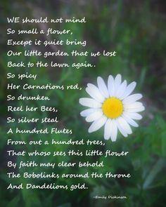 'We Should Not Mind So Small A Flower' | Photography: EDMPrintedEphemera | Inspirational Poetry: Emily Dickinson | Wildflower Print |