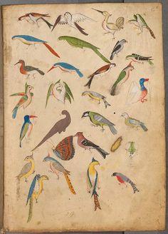 Lovely old illuminated manuscript bird illustration Art And Illustration, Illustrations, Medieval Manuscript, Medieval Art, Illuminated Manuscript, Renaissance Art, Art Graphique, Bird Art, Islamic Art