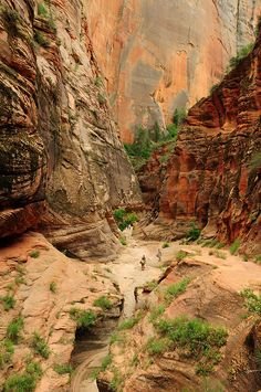 Echo canyon - Zion National Park, Utah by Tonton Dave