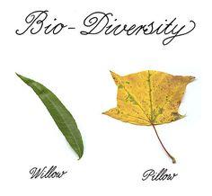 Bio-Diversity - Abstract City Blog - NYTimes.com
