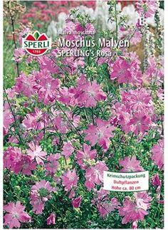 Rigt og længe blomstrende bedplante Malva Moschata - Moskus katost til natur og bondehaver, kampestensmure eller velegnet som meget holdbar skæreblomst, Tiltrækker sommerfugle. Den blomstrer første år fra frø. Sås på friland fra april til juni måned.