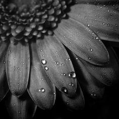 『图集』40张精彩的黑白摄影作品 - 新摄影