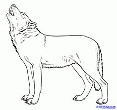 how to draw howling wolves, howling wolf step 9