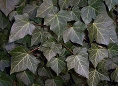 Você sabia que algumas plantas têm forte capacidade purificadora do ar?Todas as plantas, é verdade, ajudam a melhorar a qualidade do ar.Mas algumas são especiais.