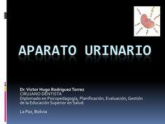 aparato-urinario-9238109 by UMSA - UPFT - UDABOL via Slideshare