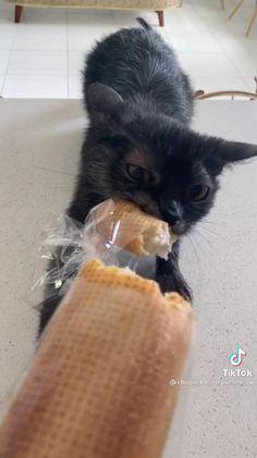 Animal Jokes, Funny Animal Memes, Funny Cat Videos, Funny Animal Pictures, Cute Funny Animals, Cat Memes, Cute Baby Animals, Funny Cute, Happy Animals