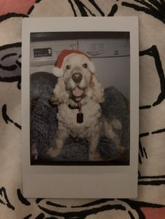 A picture of a Polaroid I took of my dog at Christmas, it makes me smile Couple Pictures, Dog Pictures, Funny Pictures, Polaroid Pictures, Polaroid Ideas, Polaroid Camera, Insta Photo Ideas, Tumblr Photography, Christmas Pictures