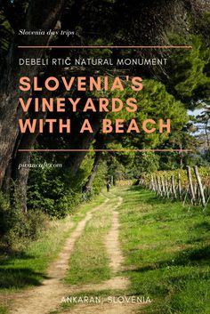 Debeli Rtic Natural Monument, Slovenia's Vineyards with a Beach, sits on a cape located on the southwestern edge of a peninsula --shared by Slovenia and Italy-- that juts out into the Adriatic near the town of Ankaran.