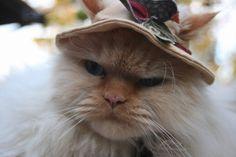 Angry gardening kitty