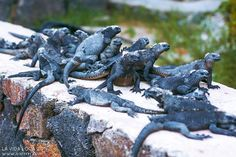 Travel Blog, Ecuador, Hiking Boots, Animals, Life, Animales, Animaux, Animal, Animais