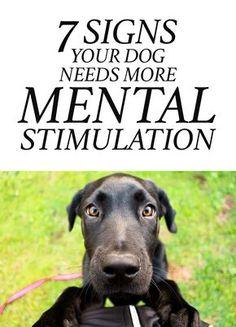 7 Signs Your Dog Needs More Mental Stimulation http://iheartdogs.com/7-signs-your-dog-needs-more-mental-stimulation/