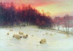 A herd of sheep try to graze among the snowy sheets they stand on as the sun sets behind the tall pine trees.