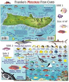 1000 Images About Hawaii Fish Cards On Pinterest