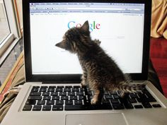 There are just as many dogs on the Web, so why do cats get all the attention?