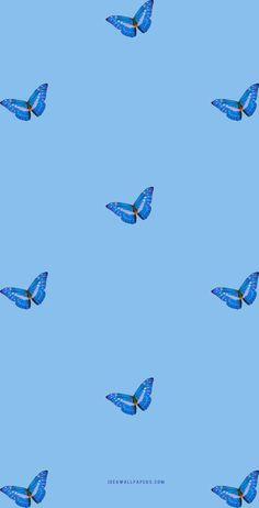 Butterfly on Blue background wallpaper - Idea Wallpapers , iPhone Wallpapers,Color Schemes Blue Background Wallpapers, Blue Wallpapers, Cute Wallpaper Backgrounds, Pretty Wallpapers, Baby Blue Wallpaper, Blue Butterfly Wallpaper, Cute Disney Wallpaper, Iphone Wallpaper Vsco, Homescreen Wallpaper