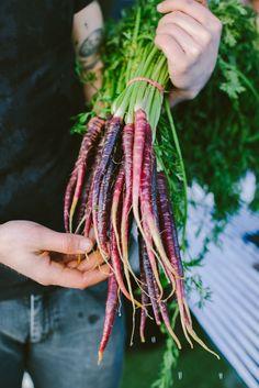 "grayskymorning: "" Purple Carrots | Luisa Brimble """