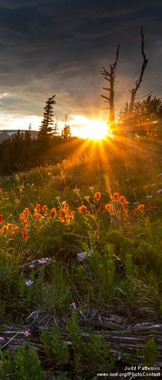 Sun sets over a field of wildflowers in bloom in Mount Rainier National Park. Photo by  Judd Patterson. See more gorgeous nature photos.