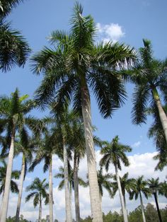 Palm trees...I can feel my blood pressure level out when I see them  :)