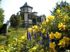 横浜山手外交官の家とキンシバイの花写真