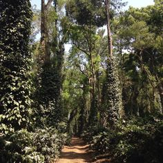 """Site visit Coorg India . Transforming commercial pepper and coffee plantation from """"Green Revolution""""practices to permaculture principles ... #permaculturedesign #soilfoodweb #sustainable by markgarrett_permaculture"""