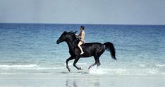 Horse and boy . Film clip from the Black Stallion . Black Arabian Horse, Beautiful Arabian Horses, Black Horses, Pretty Horses, Black Stallion Movie, Horse Movies, Horse Books, Beach Rides, Fictional Heroes