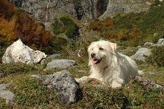 Urlaub mit dem Hund   Chiemsee-Alpenland Tourismus GmbH & Co. KG