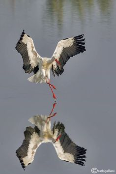Carlo Galliani Wildlife Photographer