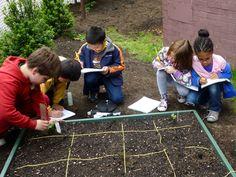 Teaching math in the school garden.