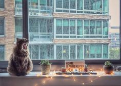 Fresh listings and views from TFC apartments: Waterfront mood courtesy of @_anna_in_nyc_ #residentphotos #repost Lazy rainy Saturday #lic #gantrypark #nyc #newyork #rainydays #mainecoon