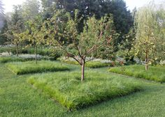 Задернение приствольного круга под плодовыми деревьями