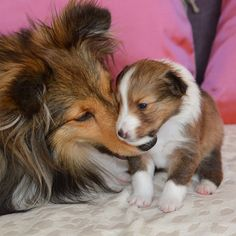 Mama and her little one