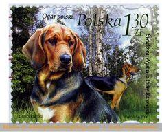 Sello: Polish Bracke (Canis lupus familiaris) (Polonia) (World Dog Show, Poznan) Mi:PL 4126 Postage Stamp Art, Vintage Dog, Vintage Stamps, Dog Show, Penny Black, Fauna, Stamp Collecting, Mail Art, Pet Birds