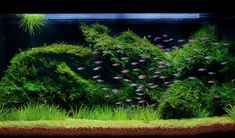 How to grow your own moss carpet | Features | Practical Fishkeeping