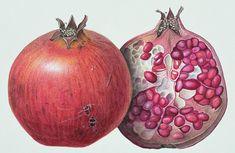 Pomegranate Painting  - Pomegranate Fine Art Print