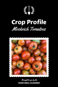 Read about our experience growing Moskvich tomatoes in the Crop Profiles section of our online Classroom.  We share the general characteristics, strengths, and weaknesses you can expect, along with specific planting and harvesting statistics. Online Classroom, Statistics, Vegetable Garden, Planting, Gardening Tips, Tomatoes, Profile, Vegetables, User Profile