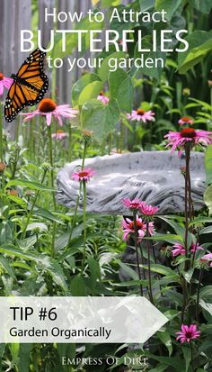 Want simple ways to attract butterflies and encourage these essential pollinators to frequent your garden? Along with monarch butterflies, these seven tips will not only encourage butterflies, but benefit the entire circle of life in your growing space. Amazing Gardens, Beautiful Gardens, Easy Garden, Home And Garden, Garden Ideas, Garden Guide, Hummingbird Garden, Organic Gardening Tips, Organic Vegetables