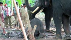 Petition to end the cruel treatment of elephants in India - ... - Care2 News Network