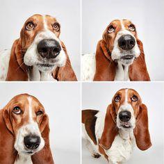 adopted-dog-teton-pitbull-humane-society-utah-4