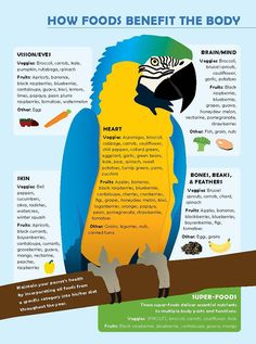 BirdTricks Parrot Infographic on Behance