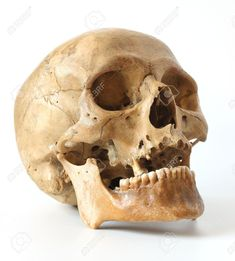 Human Skull On A White Background. Stock Photo, Picture And ...