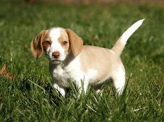 M Todos los nombres para mascotas Elige el nombre perfecto Beagle