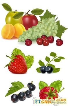 5 grape cherry fruit vector artwork