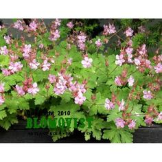 Garden, Plants, Garten, Gardens, Planters, Tuin, Plant, Planting, Yard